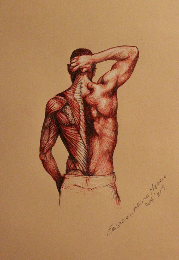 Anatomical study sketch of the human back | Eduardo Urbano Merino